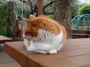 昭和記念公園1216.jpg