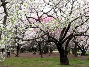 昭和記念公園1285.jpg