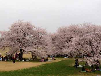 昭和記念公園1298.jpg