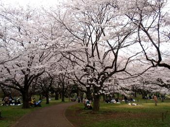 昭和記念公園1304.jpg