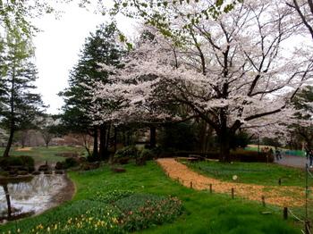 昭和記念公園1341.jpg
