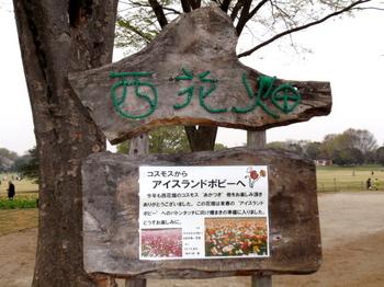 昭和記念公園1353.jpg