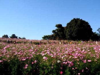 昭和記念公園1368.jpg
