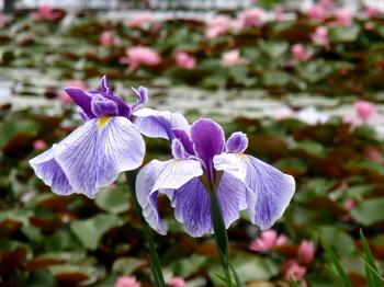 昭和記念公園1386.jpg