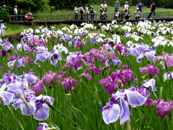 昭和記念公園1393.jpg