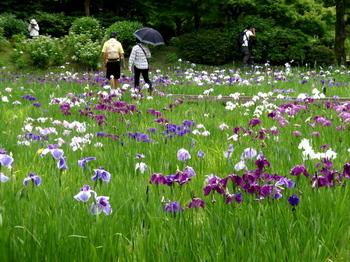 昭和記念公園1406.jpg