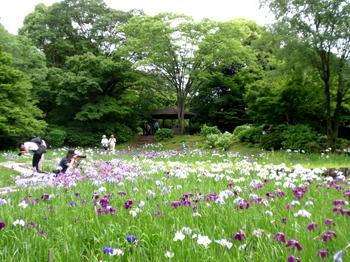 昭和記念公園1411.jpg