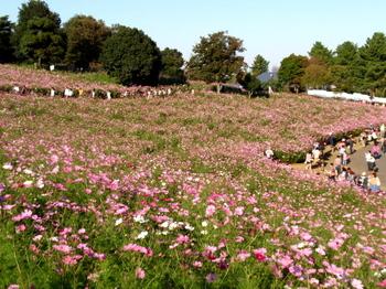 昭和記念公園1413.jpg