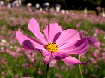 昭和記念公園1422.jpg