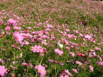 昭和記念公園1423.jpg