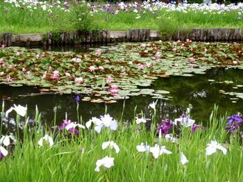 昭和記念公園1429.jpg