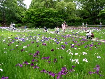 昭和記念公園1461.jpg