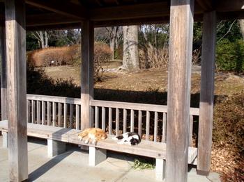 昭和記念公園1499.jpg