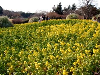 昭和記念公園1533.jpg