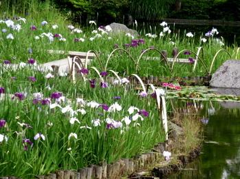 昭和記念公園1657.jpg