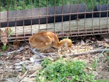 東武動物公園0394.jpg