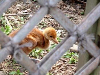 東武動物公園0400.jpg