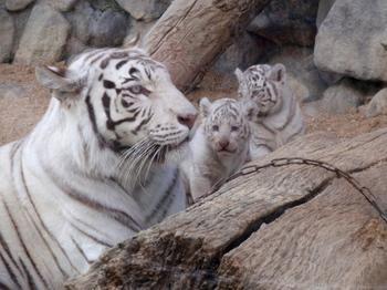 東武動物公園0718.jpg