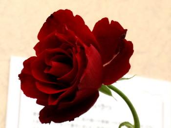 第14回 国際バラとガーデニングショウ0703.jpg