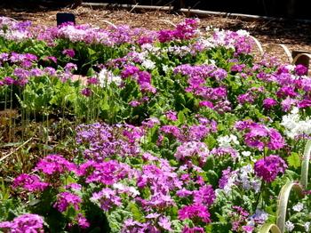 花と緑の振興センター0011.jpg