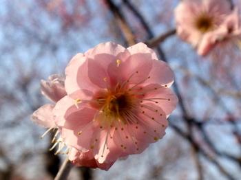 花と緑の振興センター0031.jpg