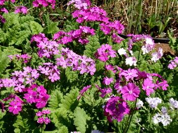 花と緑の振興センター0076.jpg