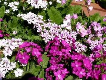 花と緑の振興センター0077.jpg
