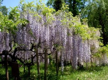 花と緑の振興センター0112.jpg