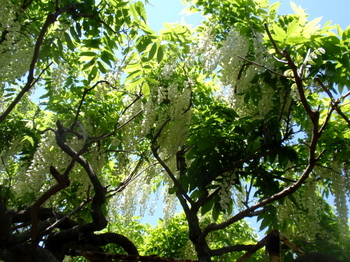 花と緑の振興センター0168.jpg
