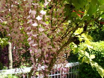 花と緑の振興センター0191.jpg