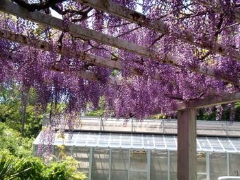 花と緑の振興センター0197.jpg