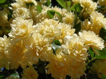 花と緑の振興センター0246.jpg