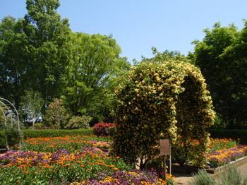 花と緑の振興センター0257.jpg