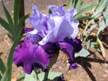 花と緑の振興センター0264.jpg