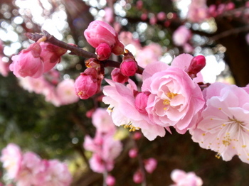 DIC川村記念美術館0404.jpg