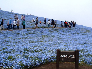 国営ひたち海浜公園0794.jpg
