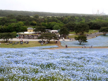 国営ひたち海浜公園0850.jpg