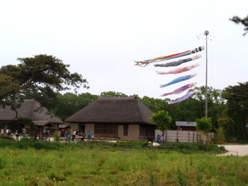 国営ひたち海浜公園0925.jpg