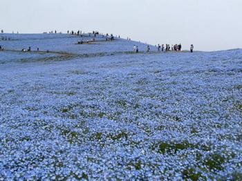 国営ひたち海浜公園0926.jpg