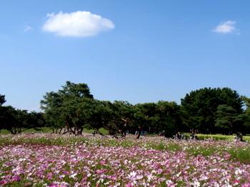 国営ひたち海浜公園0987.jpg