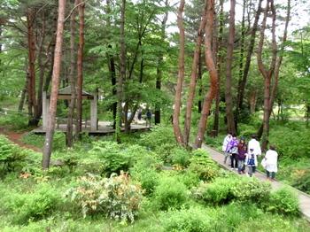 国営ひたち海浜公園0996.jpg