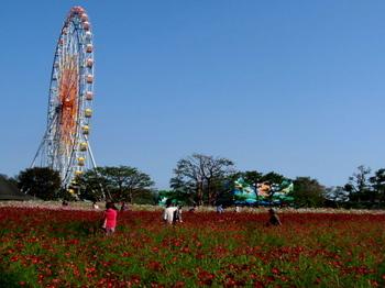 国営ひたち海浜公園1015.jpg