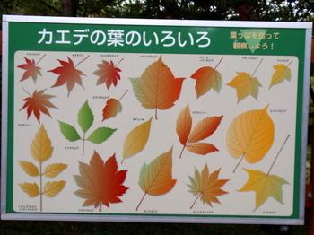 国営武蔵丘陵森林公園0016.jpg