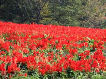 国営武蔵丘陵森林公園0237.jpg