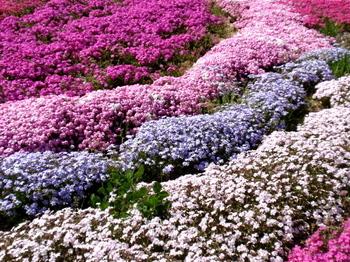 昭和記念公園0055.jpg