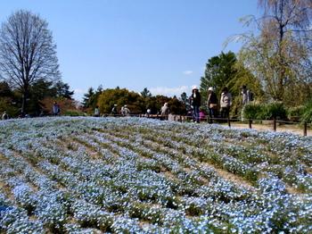 昭和記念公園0070.jpg