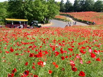 昭和記念公園0128.jpg