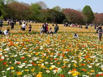 昭和記念公園0168.jpg