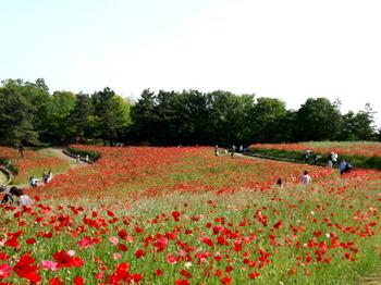 昭和記念公園0171.jpg