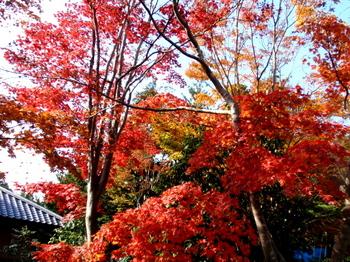 昭和記念公園0257.jpg